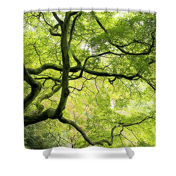 Almighty Acer Shower Curtain