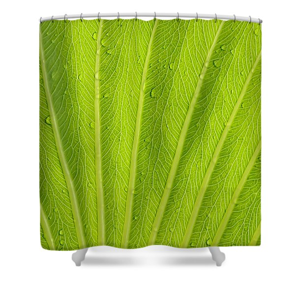 Almost Perfect Shower Curtain