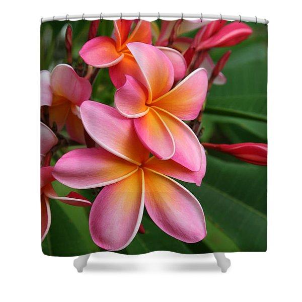 Aloha Lei Pua Melia Keanae Shower Curtain