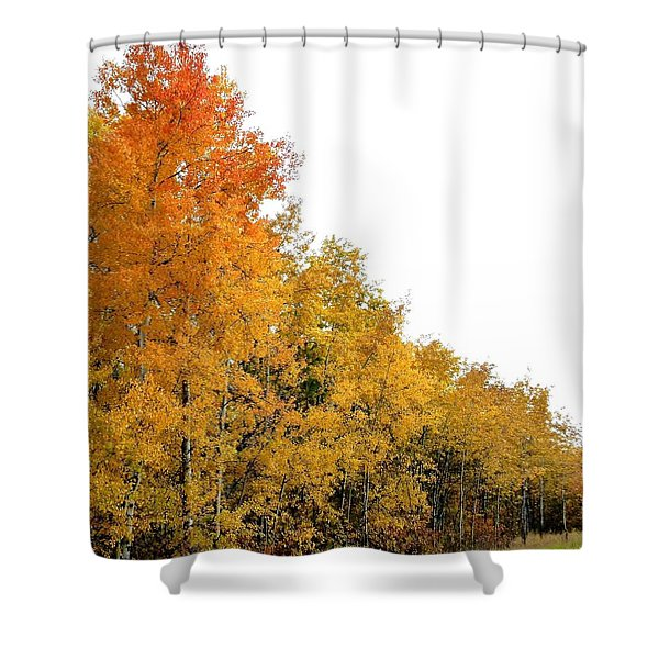 Along Broadwater Road Shower Curtain