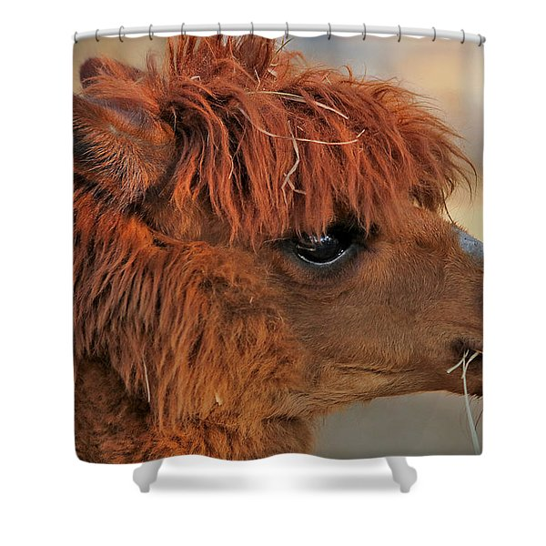 Alpaca Portrait Shower Curtain