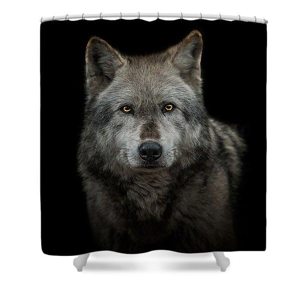 Alpha Male  Shower Curtain