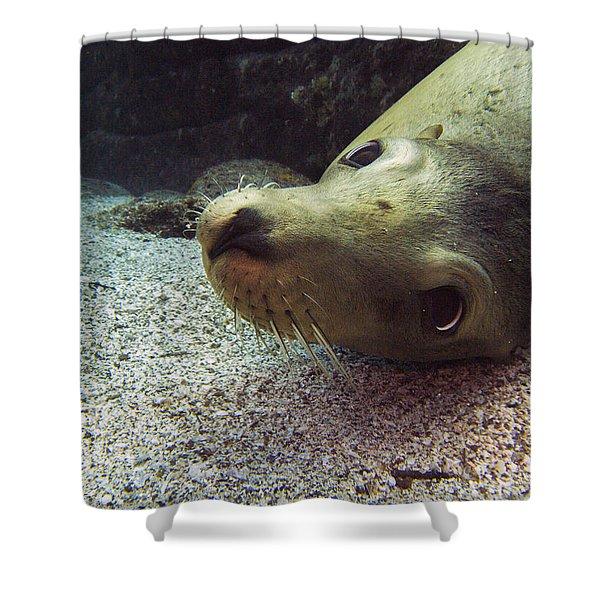 Am I Cute? Asks The Sea Lion Shower Curtain