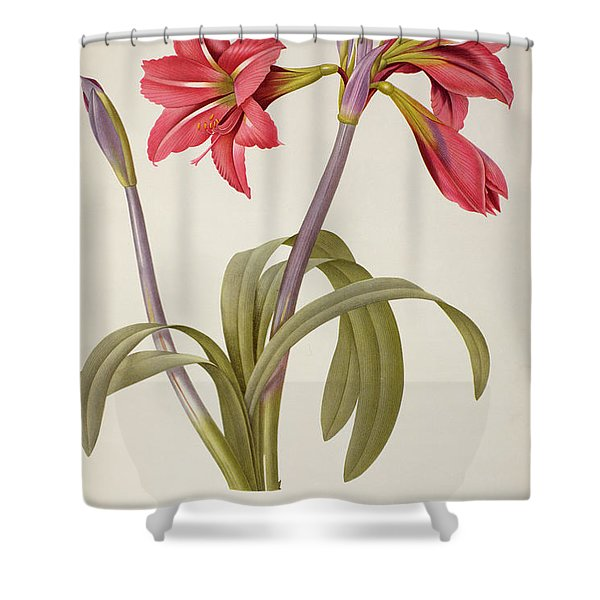 Amaryllis Brasiliensis Shower Curtain