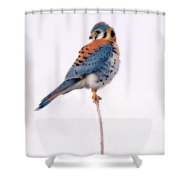 Amercian Kestrel Shower Curtain