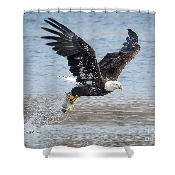 American Bald Eagle Taking Off Shower Curtain