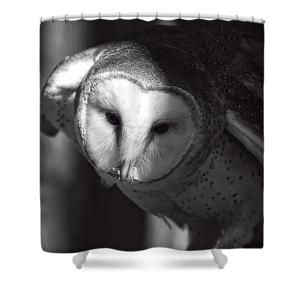 American Barn Owl Monochrome Shower Curtain