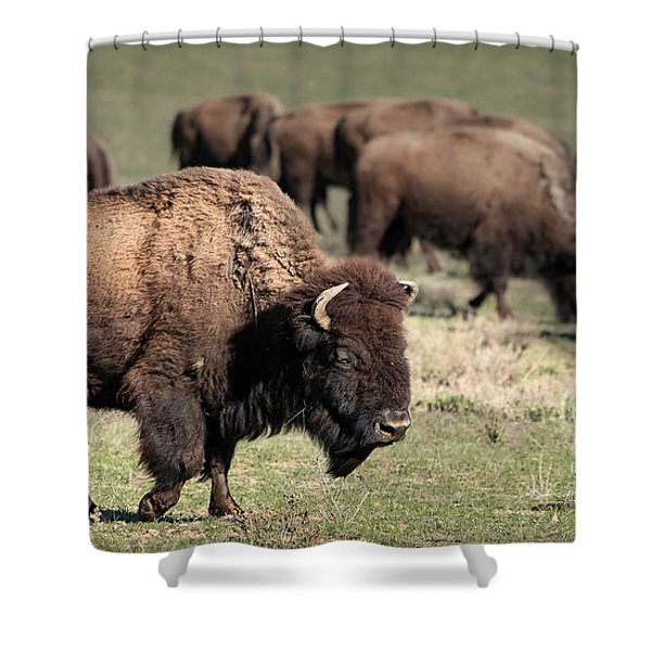 American Bison 5 Shower Curtain
