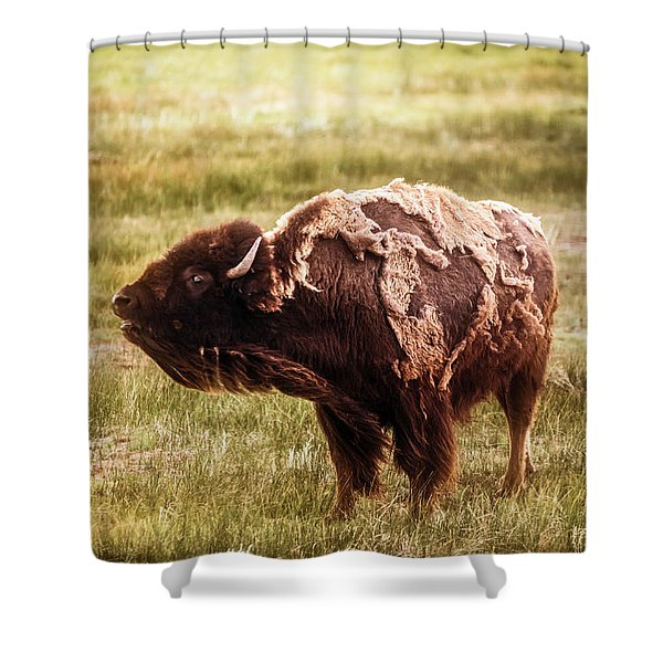 American Bison Into The Wind Shower Curtain