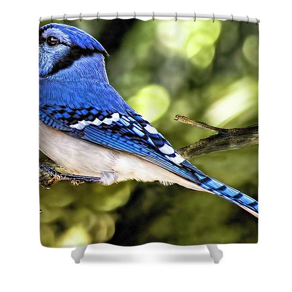 Blue Jay Bokeh Shower Curtain