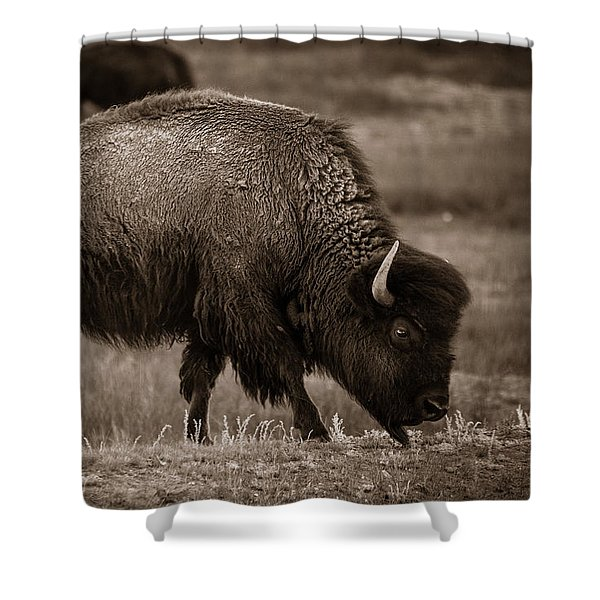 American Buffalo Grazing Shower Curtain