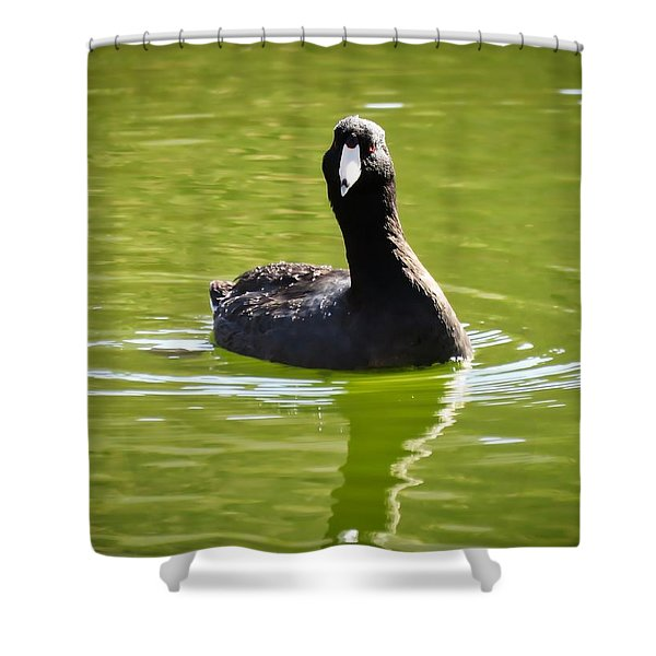 American Coot Portrait Shower Curtain