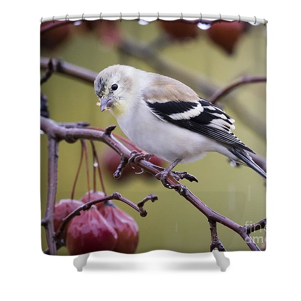American Goldfinch In The Rain Shower Curtain