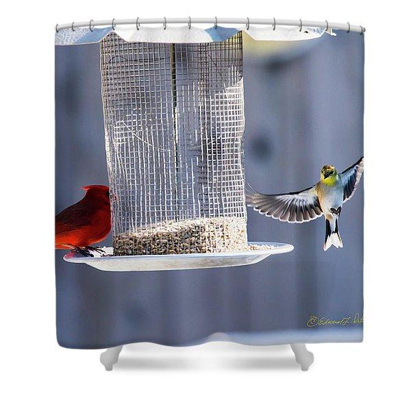 American Goldfinch Inbound Shower Curtain