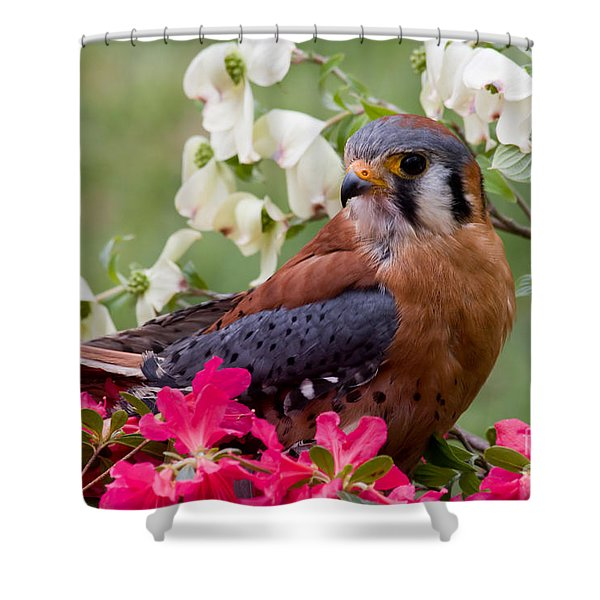 American Kestrel In The Springtime Shower Curtain