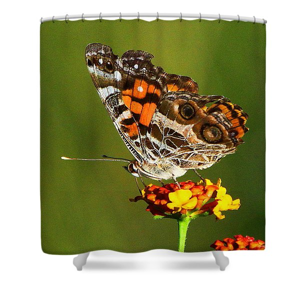 American Painted Lady Shower Curtain