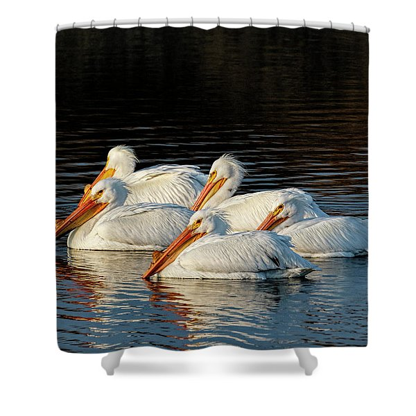 Shower Curtain featuring the photograph American Pelicans - 03 by Rob Graham