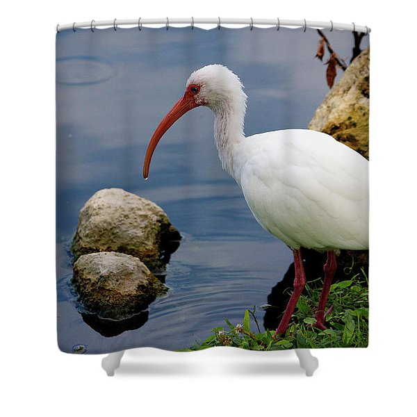 American White Ibis Shower Curtain