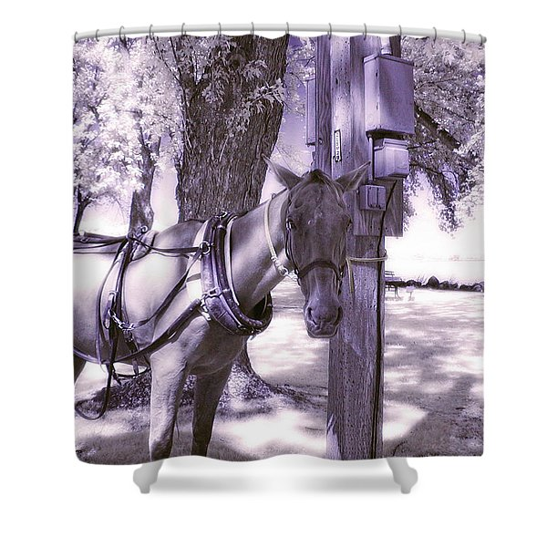 Amish Horse Harnessed Shower Curtain