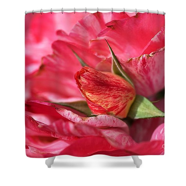 Amongst The Rose Petals Shower Curtain