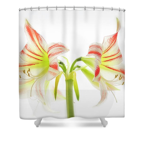 Amorice Shower Curtain