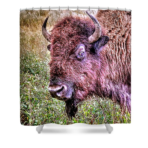 An Astonished Bison Shower Curtain