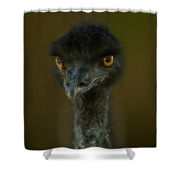 An Emu At The Lincoln Childrens Zoo Shower Curtain