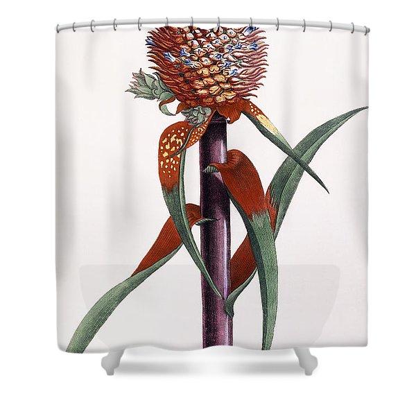 Ananas  Pineapple Shower Curtain