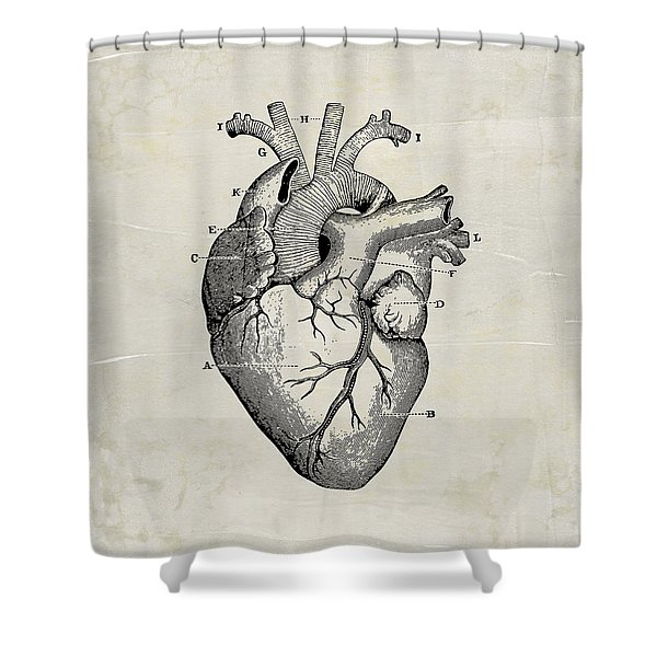 Anatomical Heart Medical Art Shower Curtain