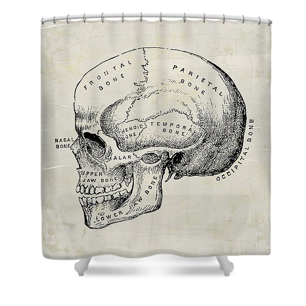 Anatomical Skull Medical Art Shower Curtain