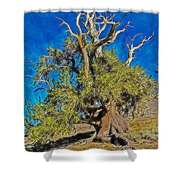 Ancient Bristlecone Pine Shower Curtain