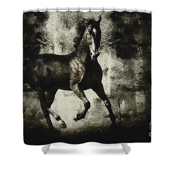 Andalusian Horse Shower Curtain