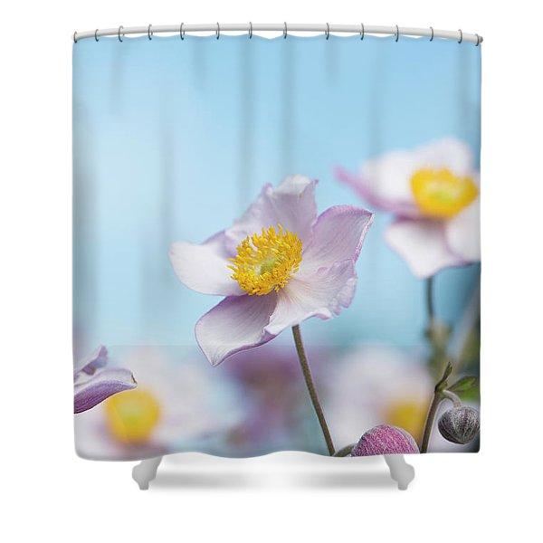 Anemone  Elegans Flowers Shower Curtain