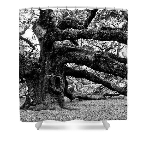 Angel Oak Tree 2009 Black And White Shower Curtain