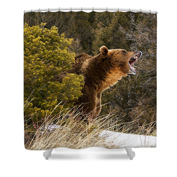 Angry Grizzly Behind Tree Shower Curtain