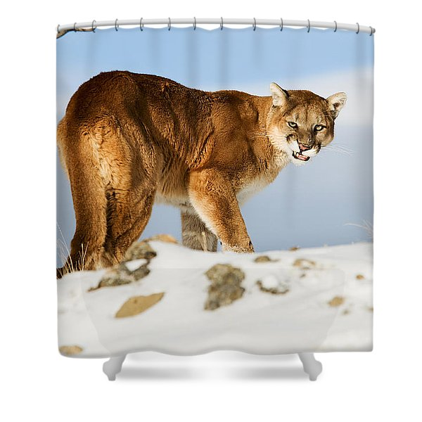 Angry Mountain Lion Shower Curtain