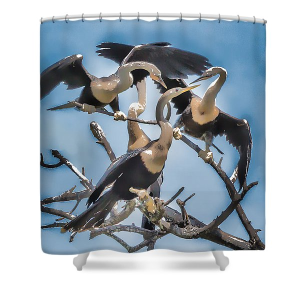 Anhinga Feeding Time Shower Curtain