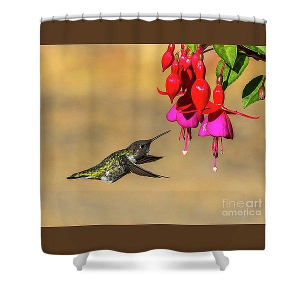 Anna And Hardy Fuchsia Flower Shower Curtain