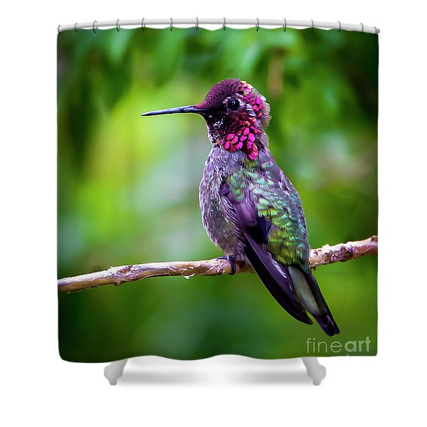 Anna Humming Bird Shower Curtain