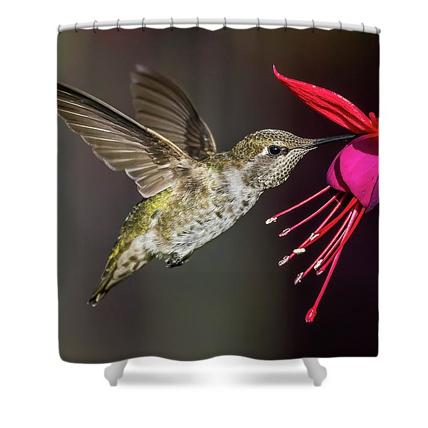 Anna Immature Hummingbird Shower Curtain
