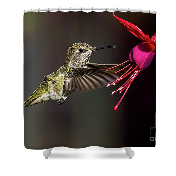 Anna Juvenile Hummingbird Shower Curtain