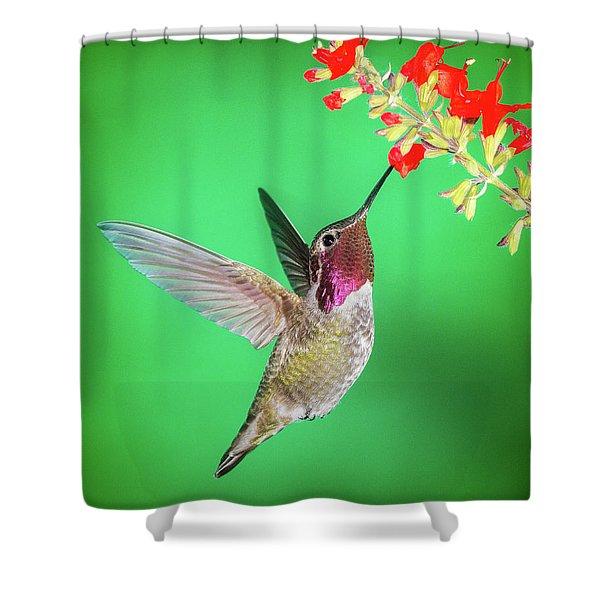 Anna's Treat Shower Curtain