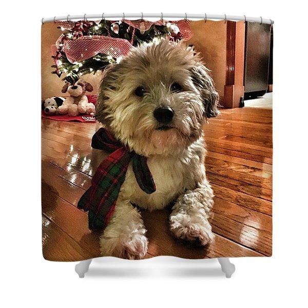 Doggy Christmas  Shower Curtain