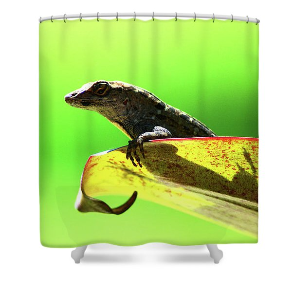 Anole In Green Shower Curtain