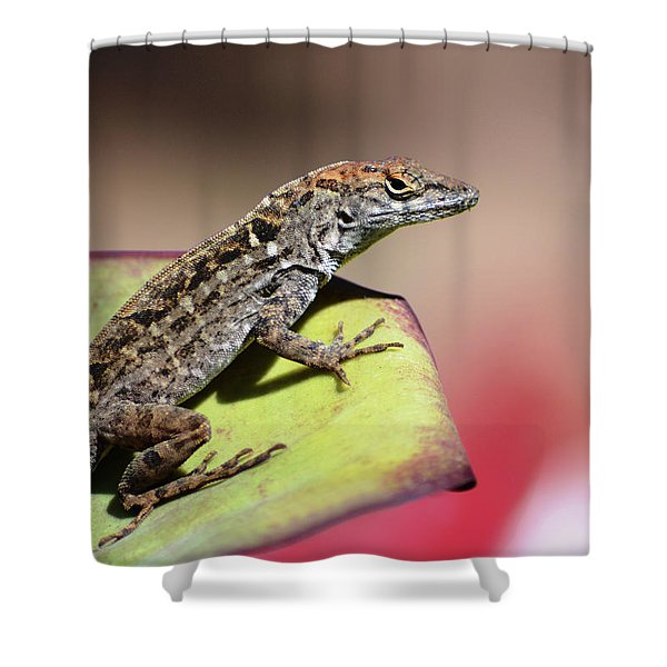Anole In Rose Shower Curtain