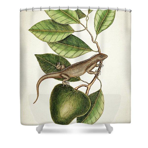 Anona Maxima Botanical  Shower Curtain