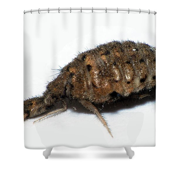 Ant Lion Shower Curtain
