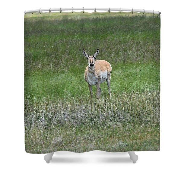 Prong Horned Antelope Lake John Swa Co Shower Curtain