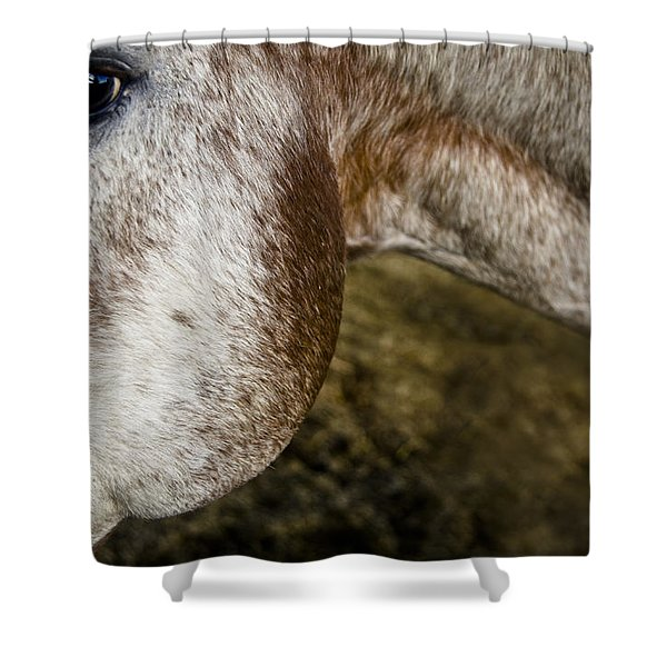 Appaloosa 2 Shower Curtain