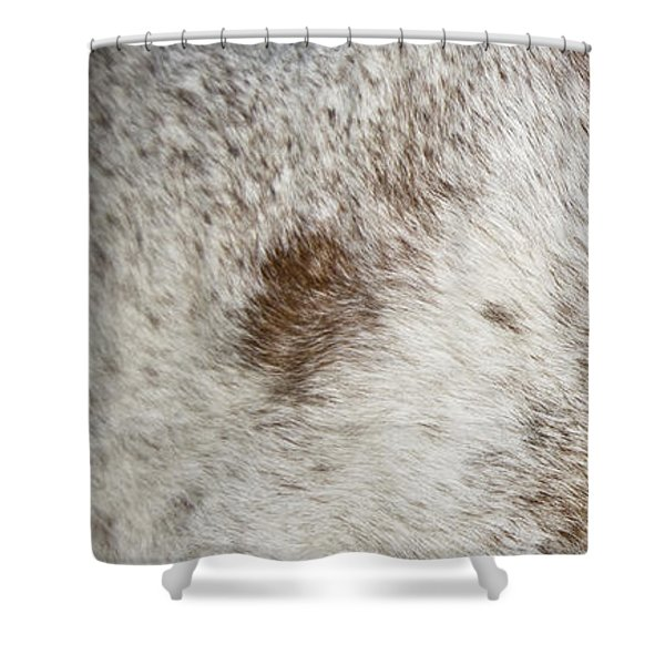 Shower Curtain featuring the photograph Appaloosa 2 by Catherine Sobredo